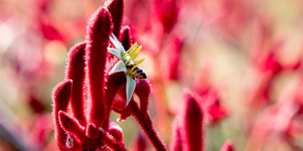 Beauty through plants