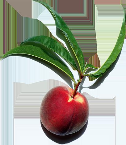 Peach Ingredient