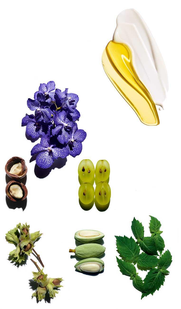 Plant Gold ingredients